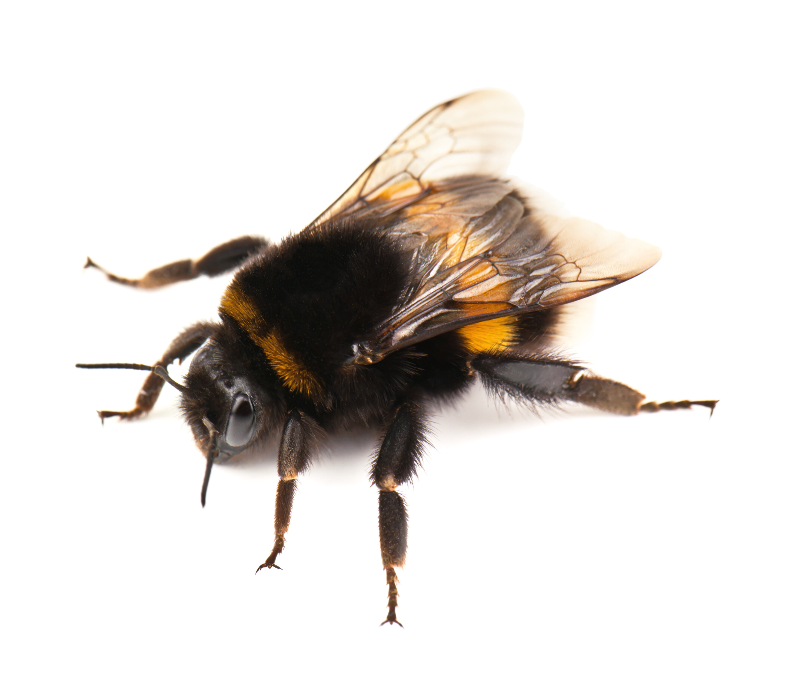 busy bumble beeswelcome to first enviro